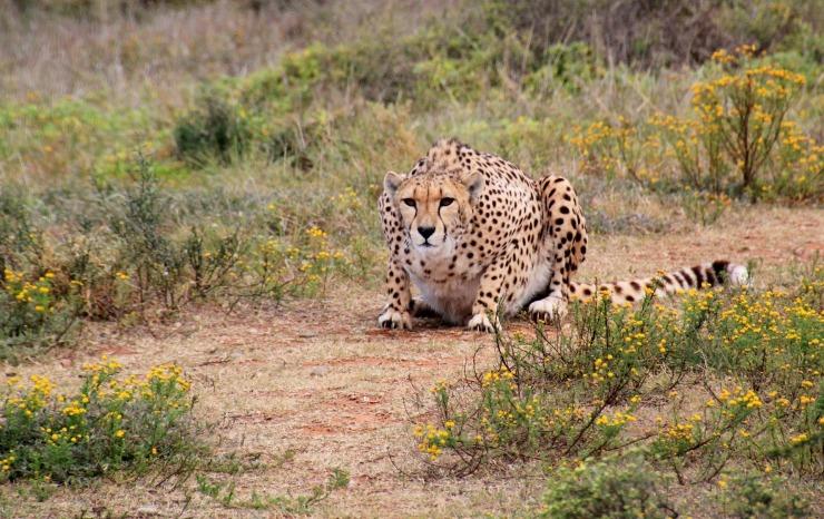 Kruger National Park, South Africa best image
